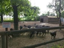 Sara la Zoo Braila Romania 34