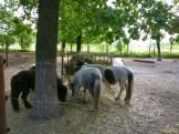 Sara la Zoo Braila Romania 37