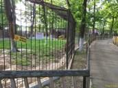Sara la Zoo Braila Romania 42