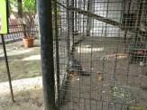 Sara la Zoo Braila Romania 6