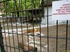 Sara la Zoo Braila Romania 7