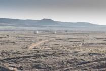 Blancos observados a la distancia (foto: Miguel Ángel Blázquez Yubero)
