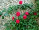 img_20140305_001243