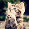 インターネットはなぜ猫画像だらけなのですか? トラフィックの15%は猫関連