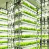 食糧危機を救う? 日本の野菜工場
