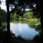 同じ池でビル・ゲイツと橋本環奈が溺れててどっちかしか助けられないとしたら?