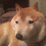 【悲報】ワイ、3DCGで犬を作るもキモすぎて咽び泣く