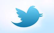 new_bird
