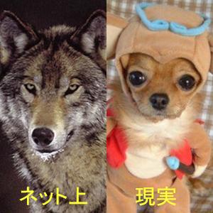 gazou_0345