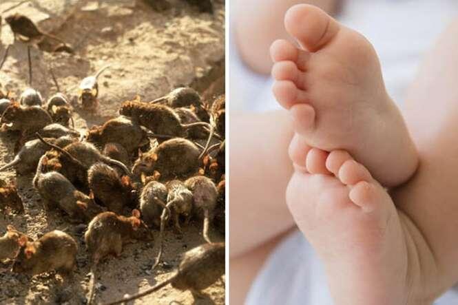 Bebê morre ao ter rosto devorado por ratos