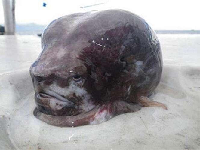 Fotos de criaturas bizarras que você não vai acreditar que são reais