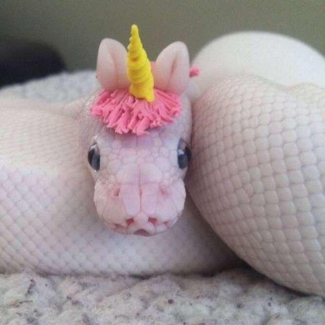 Imagens adoráveis de cobras que vão te fazer esquecer o medo que você tem desse animal