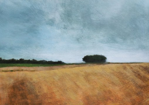Grey sky over yellow field