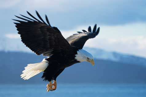 Leadership Lessons from Eagles