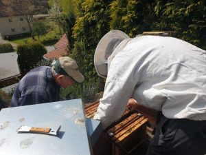 Beekeepers: granpa and grandson