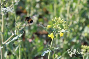 Biodiversity protector