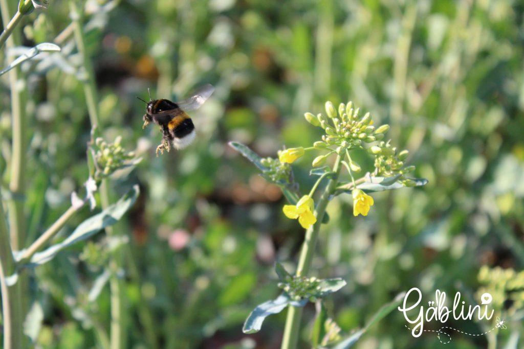 biodiversität flug