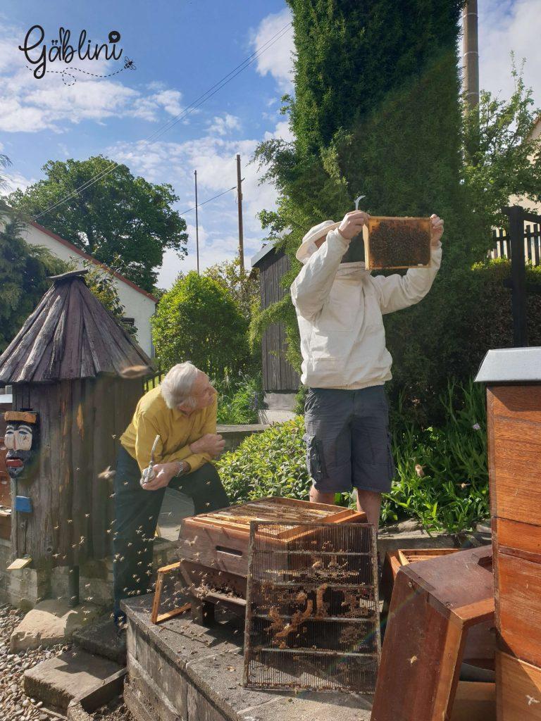 Auf der suche nach Honig