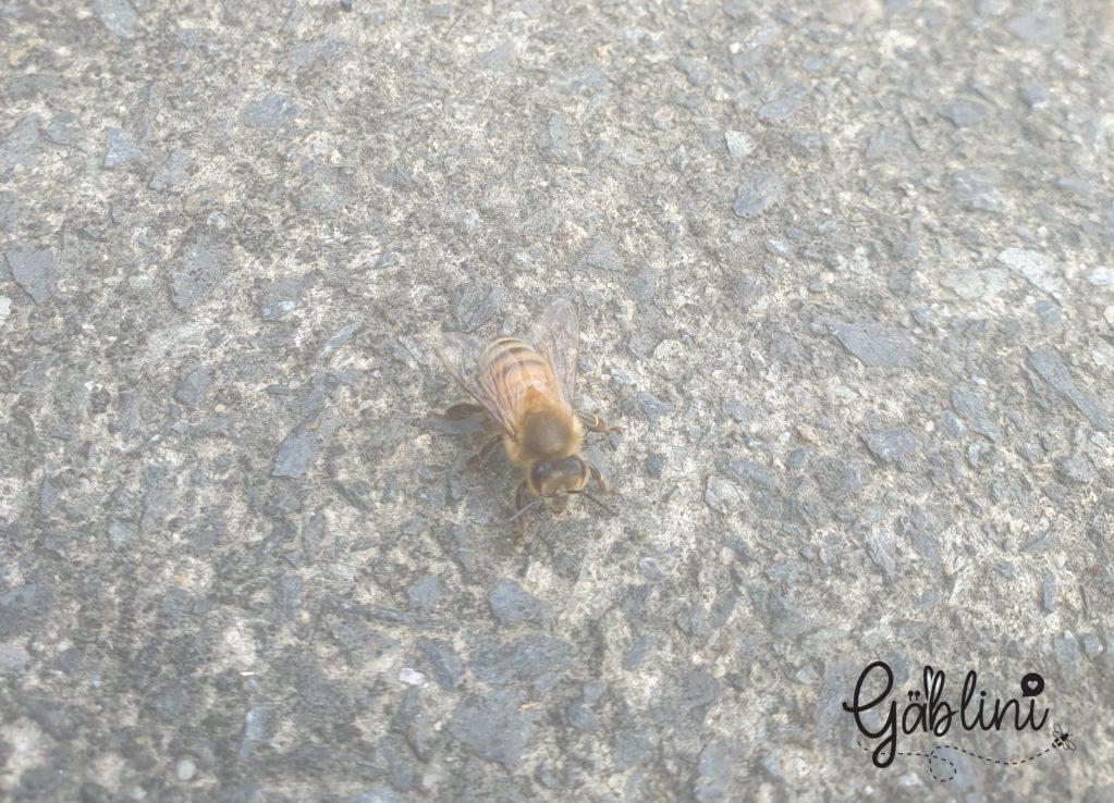 anche le api si ammalano