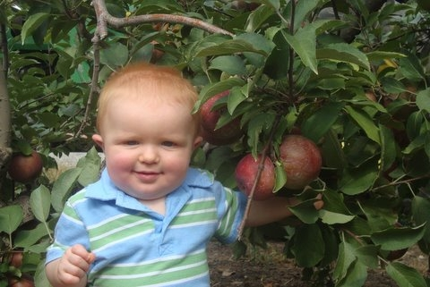 Baby in the apple orchard