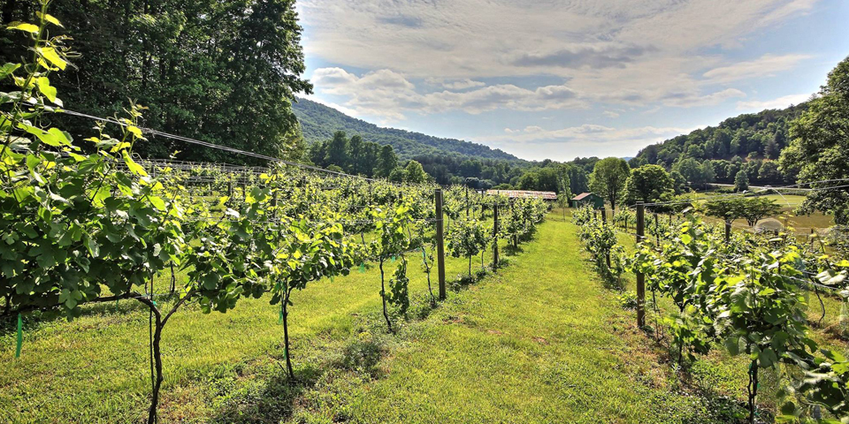 Hightower creek vineyards