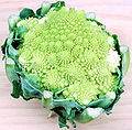 120px-Romanesco_Broccoli