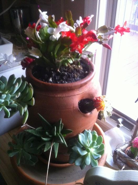 Succulent Pot, Gaga's Garden Indoors