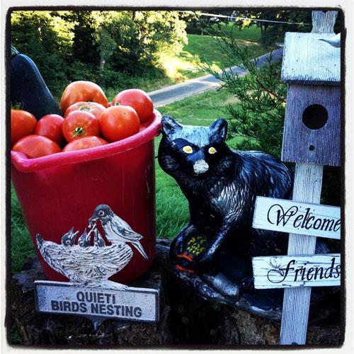 Veggie Garden Harvest & Raccoon