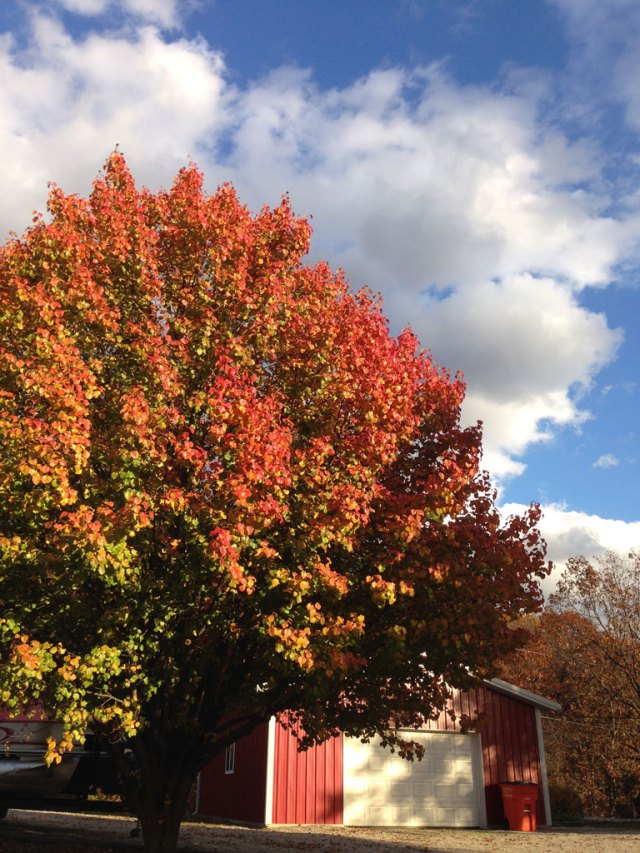 Fall Leaves | Blue Skys | Lil Red Barn