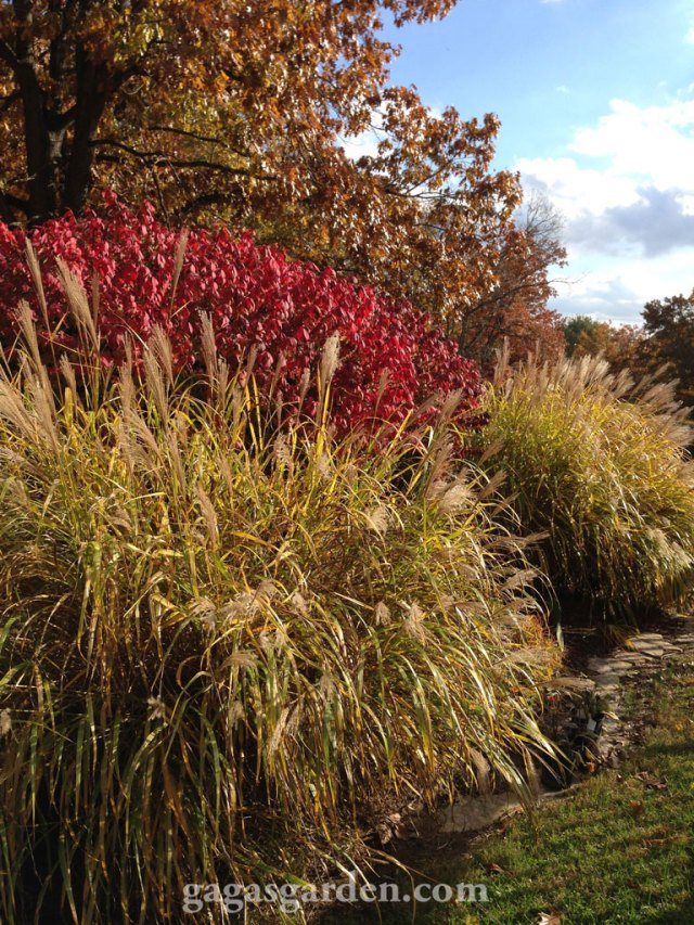 Rock Path Garden, Tall Grasses