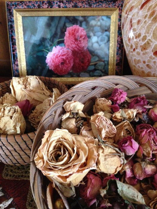 Dried roses from my garden aphotography of garden roses