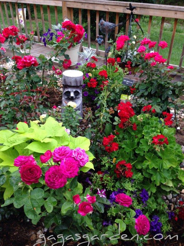 Romantic Rose Garden   'Twilight Zone'