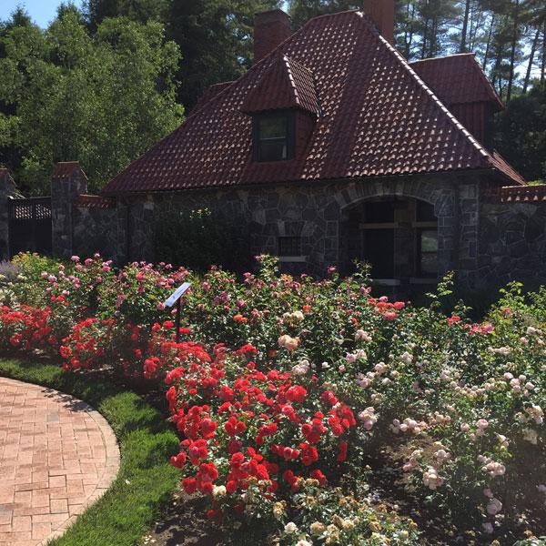 The Biltmore Rose Garden
