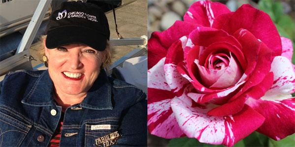 Susan Fox   'Neil Diamond' 2nd Place Hybrid Tea Award Winner in 2014 American Rose Society Photography Contest Novice Class