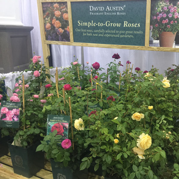 David Austin Display at the Independent Garden Center Show