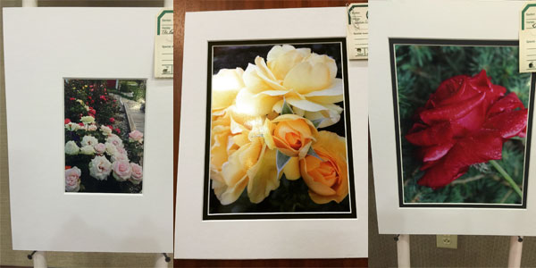 The American Rose Society Judges Class Winners | ARS National Convention, New York, 2015