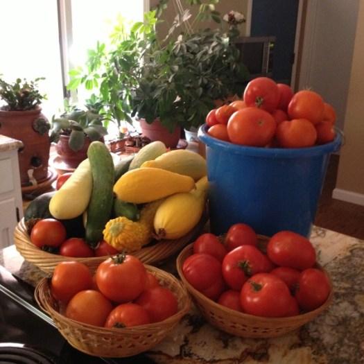 Veggies for Sale | CSA