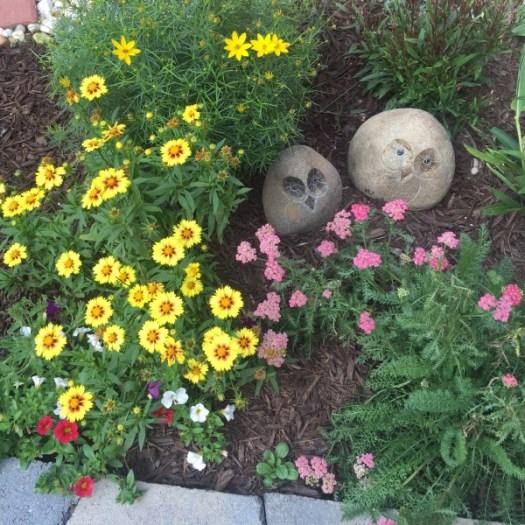 Coreopsis | Yarrow | Petunias