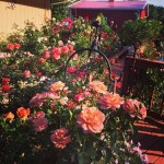 Gaga's Garden In Bloom