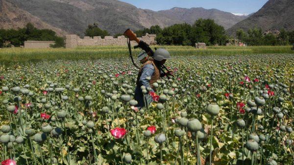 Afghanistan, la Guerra dell'oppio #milapersiste