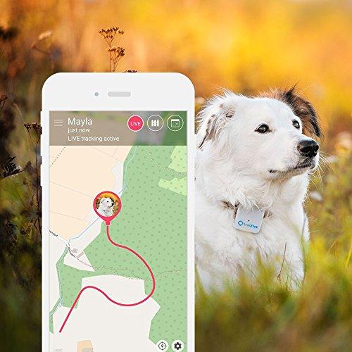 Oggetti di Design per Cani, Gatti e Padroni