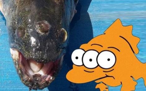 3 Augen Fisch