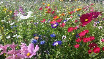 Deine Balkonblumen Retter Fur Bienen Und Hummeln Gaias Kinder
