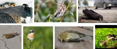 Vogelsterben DE