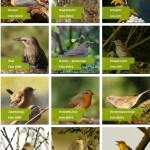 Vogelarten regional