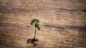 Der einsame Baum - Waldsterben