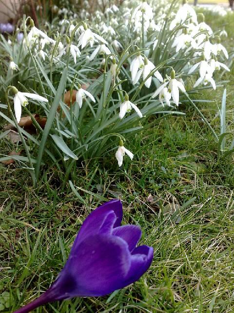 Frühling in leverkusen alkemrath