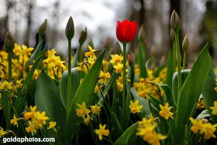 Reise in's Blumenparadies Keuckenhof