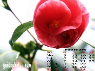 2008-02 desktop Hintergrund