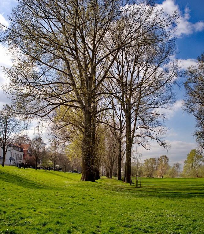 Rheinufer bei Rodenkirchen Auenlandschaft Baum Wiese